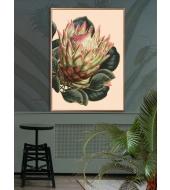 Megaposter Creme Protea