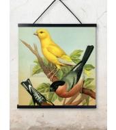 Poster Birds 50x50cm