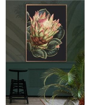 black protea.jpg