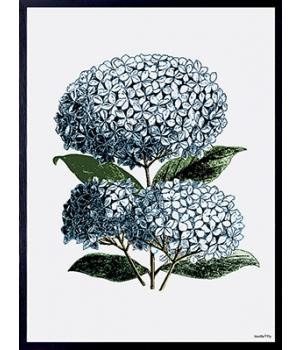 blue hydrangea 30x40cm.jpg