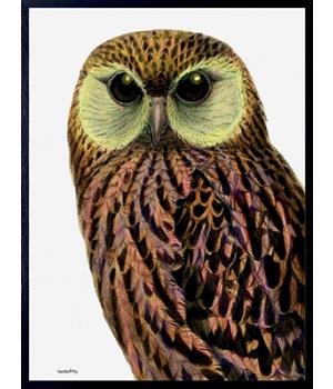 green faced owl 30x40cm.jpg