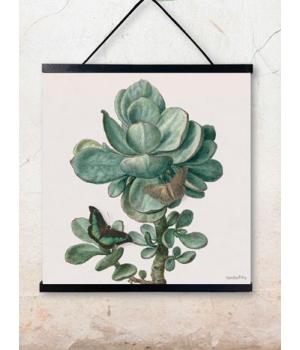 succulent 50x50cm.jpg