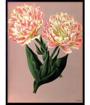 tulips 30x40cm.jpg