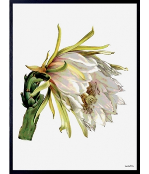 white flower 30x40cm.jpg
