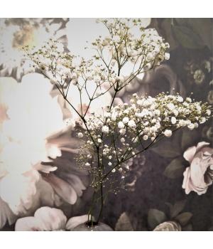 Kipslill1.jpg