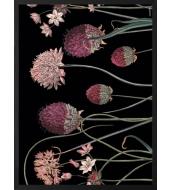 Poster Alliums