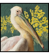 Poster Pelican