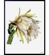Poster White Flower