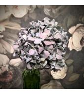 Kuivatatud hortensia