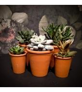 Succulent terracotta-potis