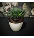 Succulent Hawortia keraamilises potis.jpg