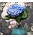 sinine hortensia.jpg
